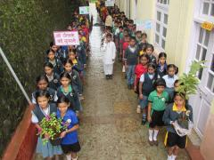 Special Plantation Drive